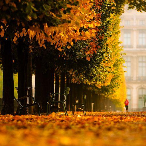 Jardin des Tuileries by Ryan Blyth