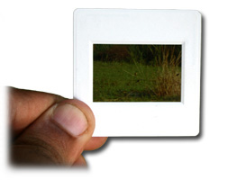 handscan - ScanMyPhotos NEW Lower Pricing for 35mm Slide Scanning